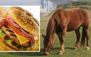 שערוריית בשר הסוס הגיעה ליוון